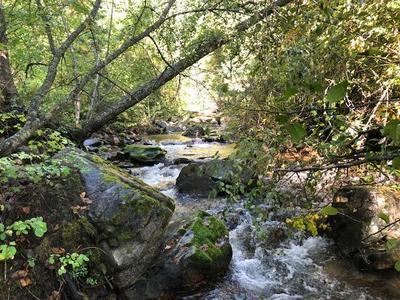 97 MURPHY RD, Kettle Falls, WA 99141 - Photo 1