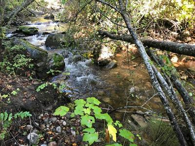 97 MURPHY RD, Kettle Falls, WA 99141 - Photo 2