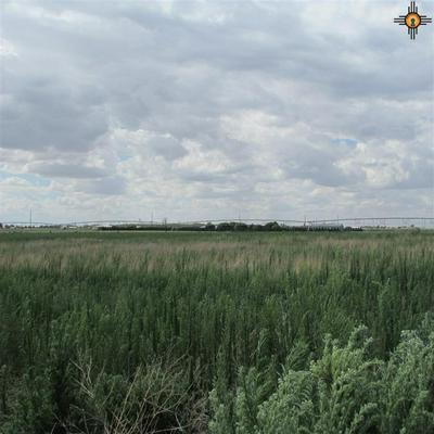 440 S R RD O, Portales, NM 88130 - Photo 2