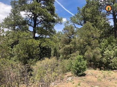 TRAIL CANYON RD, Raton, NM 87740 - Photo 2