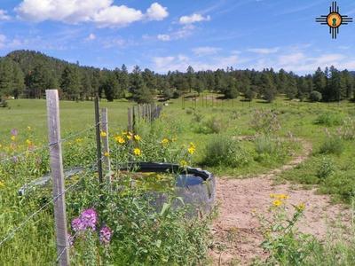 550 BILL KNIGHT GAP ROAD, Luna, NM 87824 - Photo 1
