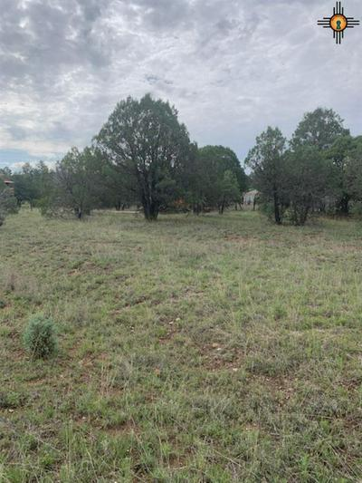 122 SPRUCE, Reserve, NM 87830 - Photo 2