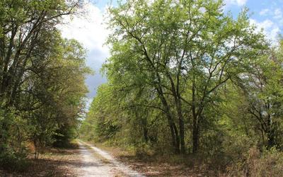 SW PINE LAKE RD, Lee, FL 32059 - Photo 2