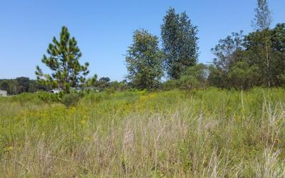 TBD SW SEDGEFIELD LANE, Fort White, FL 32038 - Photo 2
