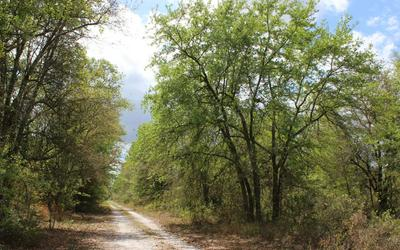SW PINE LAKE ROAD, Lee, FL 32059 - Photo 1