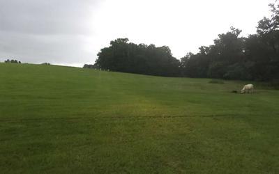 1791 ALACHUA COUNTY, Alachua, FL 32615 - Photo 2