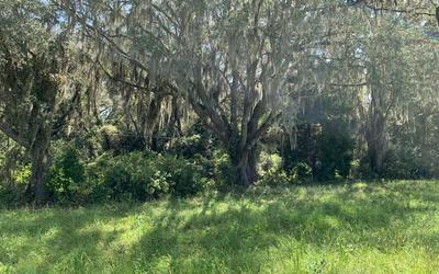 SW PINEMOUNT ROAD, Lake City, FL 32055 - Photo 2