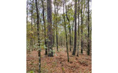 NE BLUESPRINGSCHURCH RD, Lee, FL 32059 - Photo 2