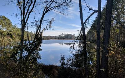 CR 137, Wellborn, FL 32094 - Photo 1