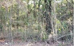 TBD SE OAK TREE ROAD, Branford, FL 32008 - Photo 2