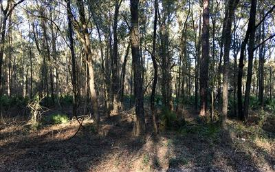 FROM LIVE OAK; SOUTH ON HWY 129; RIGHT ON CR 349; PROPERTY ON RIGHT, OBrien, FL 32071 - Photo 2