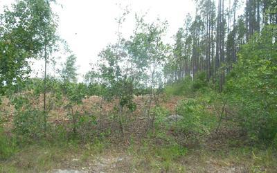 TBD SW 52ND TERRACE, Jasper, FL 32052 - Photo 1
