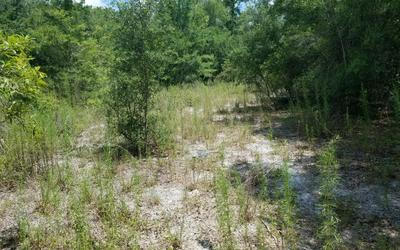 TBD SW CR 240, Lake City, FL 32024 - Photo 2