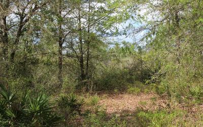 SW PINE LAKE RD, Lee, FL 32359 - Photo 2