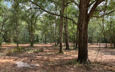 N 127TH DRIVE (MY GPS CALLED IT LOBLOLLY LANE) **19625 127TH DRIVE IS RIGHT ACROSS THE ROAD., OBrien, FL 32071 - Photo 2