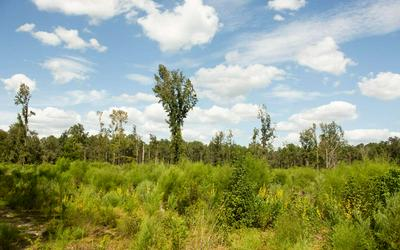 TBD NE HOLLY RD, Branford, FL 32008 - Photo 1