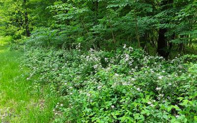 LT19 SERENITY RIDGE, Blairsville, GA 30512 - Photo 1