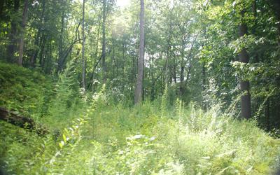 EAGLES NEST CIRCLE, Suches, GA 30572 - Photo 1