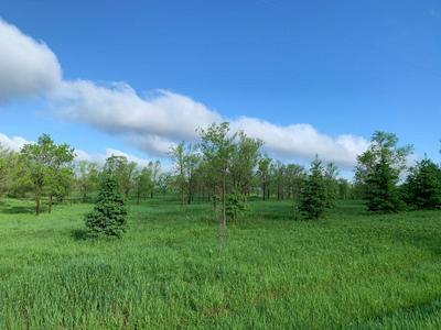 1 LLAMA, Dalbo Township, MN 55017 - Photo 2