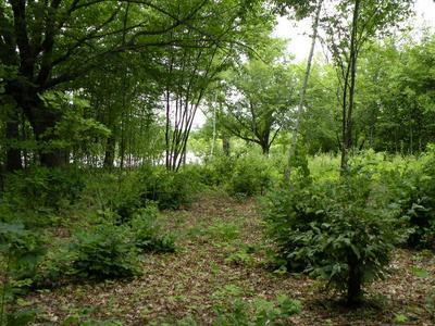XXX CROOKED LAKE LANE SW, Farwell, MN 56327 - Photo 1