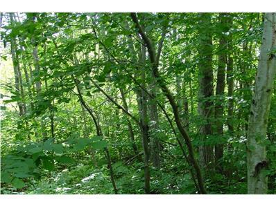 N6677 KAISER RD, Richland Township, WI 54530 - Photo 1