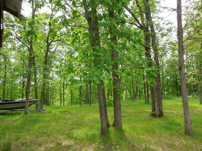 13300 PINE TREE HAVEN DR SW, Pillager, MN 56473 - Photo 2
