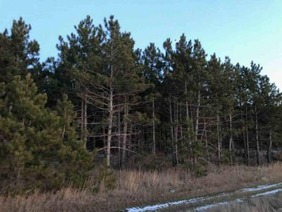 TBD COUNTY HIGHWAY 26, Osage, MN 56570 - Photo 2