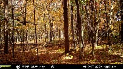 40 ACRES SHILTS AVENUE, Jump River Twp, WI 54433 - Photo 1