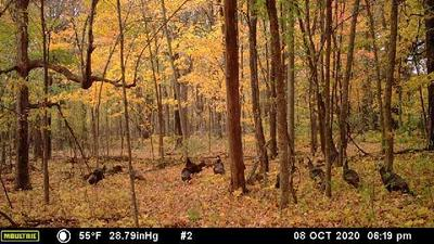 40 ACRES SHILTS AVENUE, Jump River Twp, WI 54433 - Photo 2