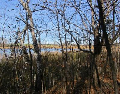 XXX CROOKED LAKE SW, Farwell, MN 56327 - Photo 2