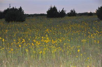 LOT 1 COUNTY ROAD 653, Farmersville, TX 75442 - Photo 2