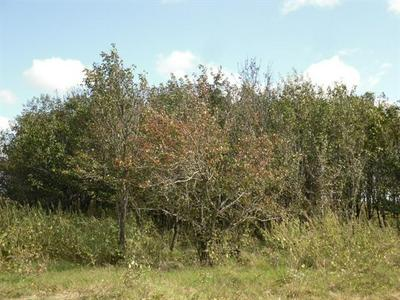 121 HCR 3379 LOT2, Hubbard, TX 76648 - Photo 2