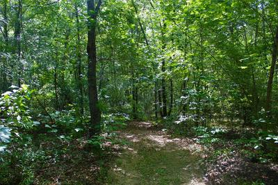 TR. 113 TRIPPLE CREEK RD, Avery, TX 75554 - Photo 2