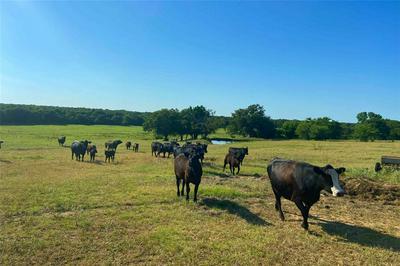 TBD ALLEN ROAD, Forestburg, TX 76239 - Photo 1
