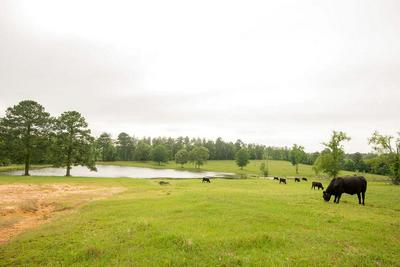 265 COUNTY ROAD 4626, Troup, TX 75789 - Photo 2