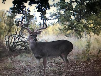 TBD CR 637, Gustine, TX 76455 - Photo 2