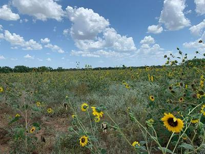 TBD CR 195, Breckenridge, TX 76424 - Photo 2