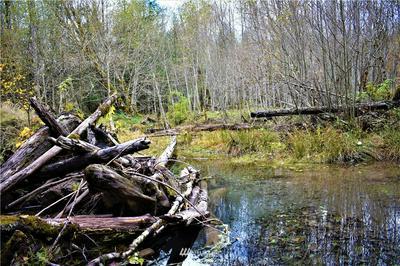 155 EAGLE PEAK, Packwood, WA 98361 - Photo 1
