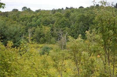 LOT A CHAPIN ROAD, Georgetown, NY 13072 - Photo 1