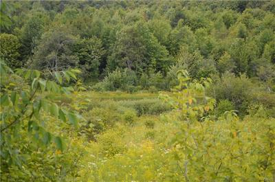 LOT A CHAPIN ROAD, Georgetown, NY 13072 - Photo 2