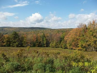 BLACKS ROAD, Cooperstown, NY 13326 - Photo 1