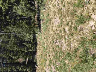 1309 VICTORIA ST, Cloudcroft, NM 88317 - Photo 2