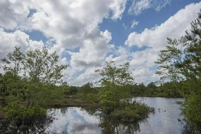 1233 WHIRLPOOL RD, CENTURY, FL 32535 - Photo 2