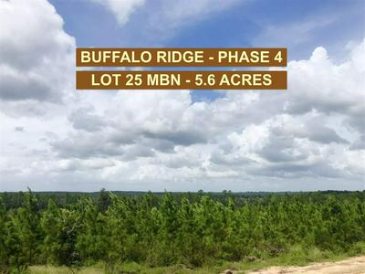 LOT 25 MBN MOLINO BRIDGE RD, PACE, FL 32571 - Photo 1