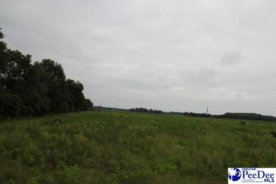 000 PATE ROAD, BISHOPVILLE, SC 29010 - Photo 2