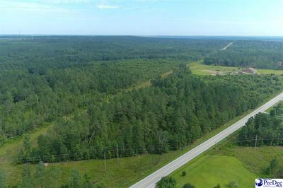 45 +/- ACRE TRACT HIGHWAY 177, Wallace, SC 29596 - Photo 1