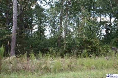243 BYRNES CIR, Johnsonville, SC 29555 - Photo 2