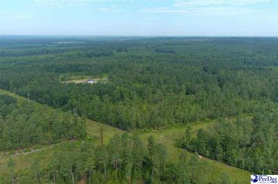 45 +/- ACRE TRACT HIGHWAY 177, Wallace, SC 29596 - Photo 2