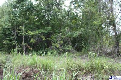 S OLD RIVER RD, Pamplico, SC 29583 - Photo 2