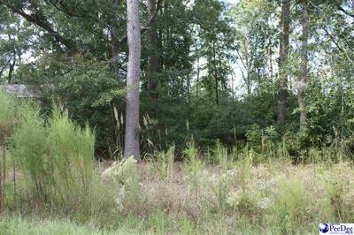 243 BYRNES CIR, Johnsonville, SC 29555 - Photo 1